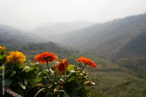 Fotografia flower in the mountains