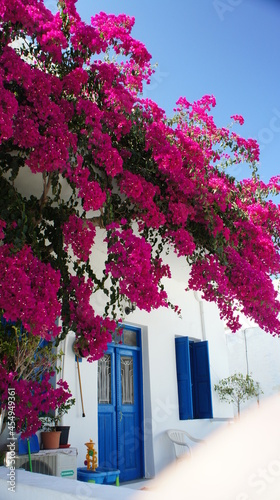 Photo bougainvillaea and white traditional building In Greek island of Koufonisi Augus