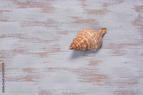 Fotografija Closeup of a beautiful conch shell on a wooden surface