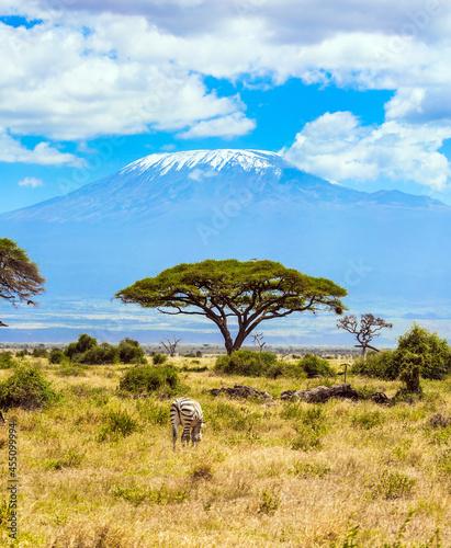 Fotografie, Obraz Amboseli park, desert acacia