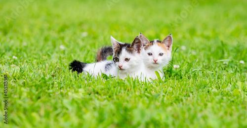 Tela little kittens