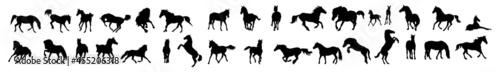 Fotografia, Obraz wild horses. Horses silhouettes.