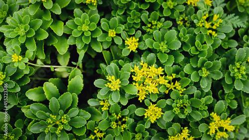 Fotografia Fresh green leaves as background