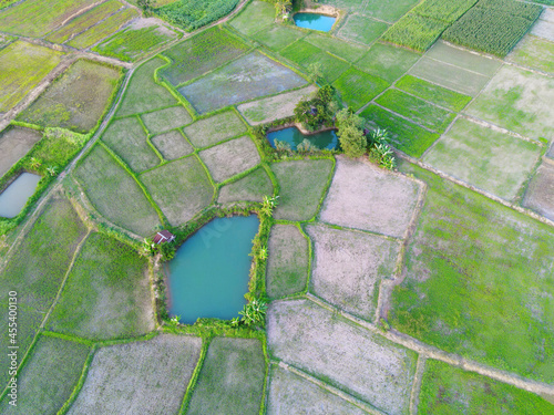 Fototapeta Aerial view of the green rice fields nature agricultural farm background, top vi