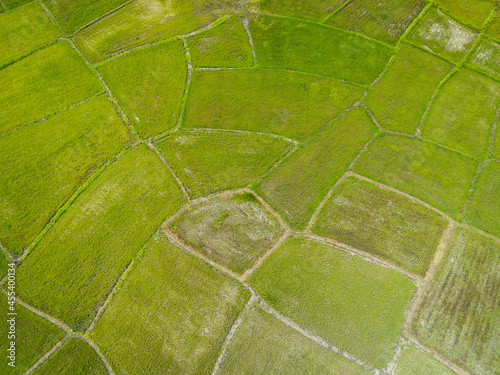 Aerial view of the green rice fields nature agricultural farm background, top view rice field from above with pathway agricultural parcels of different crops in green , Birds eye view
