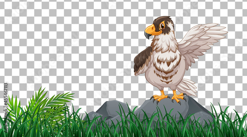 Valokuva Hawk standing on the grass field on transparent background