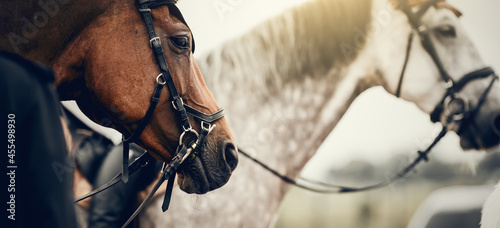 Valokuva Portrait sports stallions in the bridle after the competition