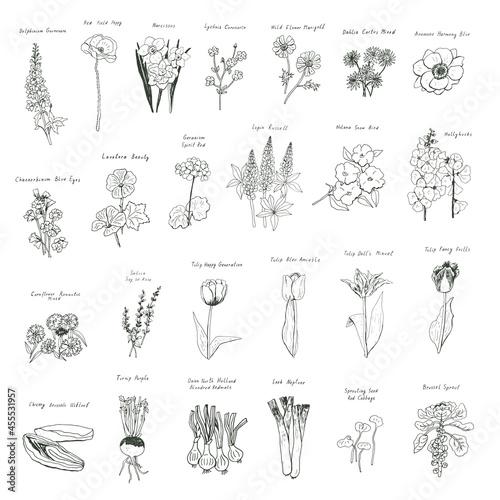 Murais de parede Vegetables, flowers, tulips vector illustrations set