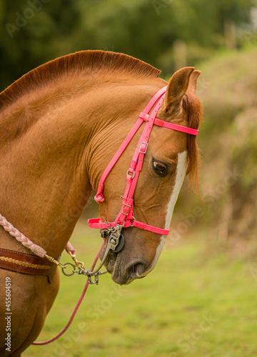 retrato de caballo al aire libre