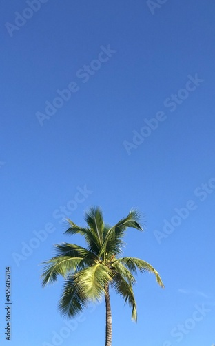 Canvastavla beautiful palm tree on the beach of Haiti