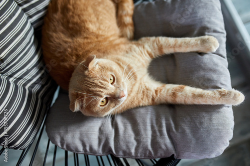 Canvastavla Top view Lazy tabby ginger cat relaxing on pillow placed on soft armchair