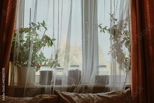 Przetwory i kwiaty stojące na parapecie przy oknie za firanką w domu.