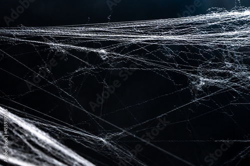Murais de parede Halloween background of a horror spider net or cobweb isolated with copy space for text