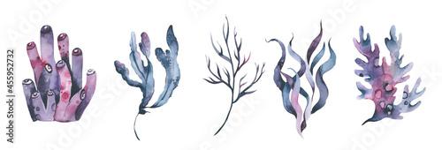 Obraz na plátně Watercolor Seaweeds