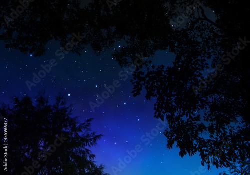 Foto 森から見上げる星空、天空の創造アート