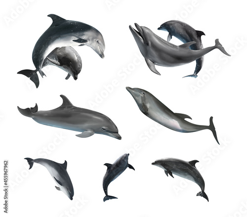 Canvas Print Beautiful grey bottlenose dolphins on white background, collage