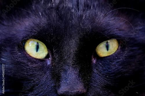 Fotografie, Obraz close up of a cat