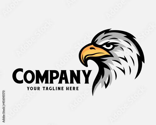 Foto eagle hawk falcon head bird drawing art logo template illustration inspiration
