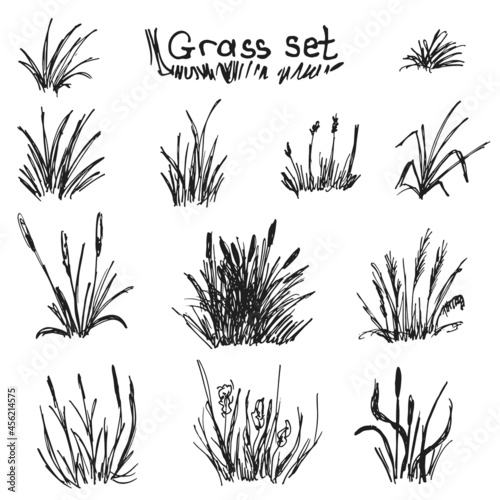 Foto Vector hand drawn set of grass and grass bunches. Sketch.