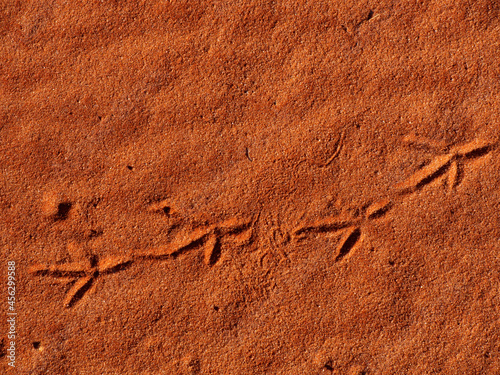 Bird tracks in outback Red Centre Central Australia Poster Mural XXL
