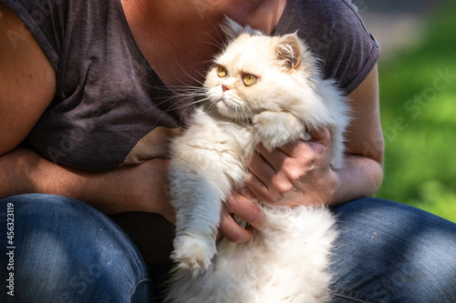 Fotografie, Obraz portrait of a persian exotic longhair cat held by its owner