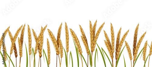 Obraz na płótnie Realistic wheat