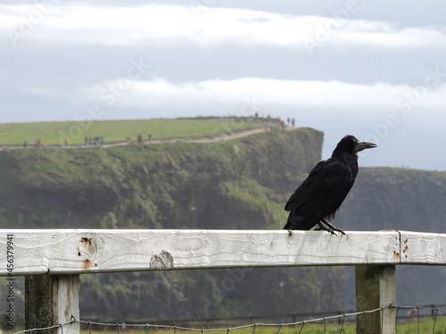 Fototapeta premium Acantilados de Moher, Irlanda. Con unas impresionantes vistas.