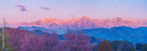 Photo 小川村立屋より桜越しに望む北アルプスの朝焼け