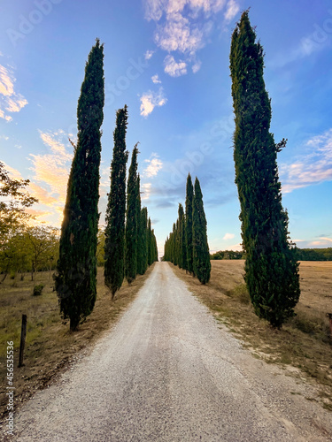 Fototapeta premium cypress trees and road in the countryside, tuscany italy