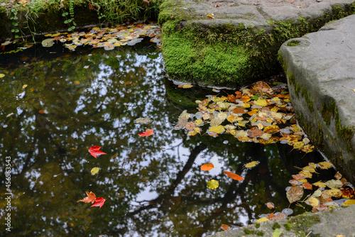 foliage in brook in autumn Fotobehang