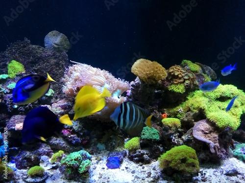 Foto tropical coral reef