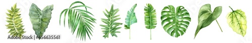 Fotografie, Obraz Tropical leaves collection