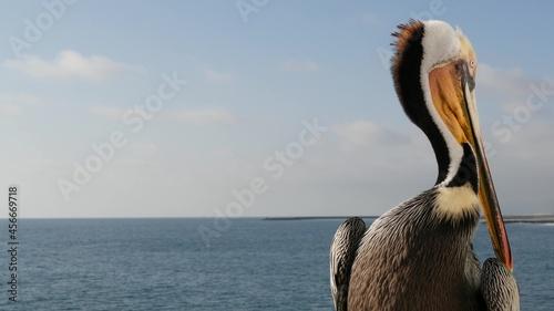 Photo Wild brown pelican on wooden pier railing, Oceanside boardwalk, California ocean beach, USA wildlife