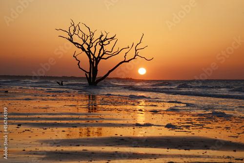 Fotografia dead tree on beach
