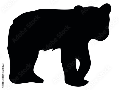Fotografering Bear, grizzly, wild animal living in forest, wildlife, beast, predator, carnivor