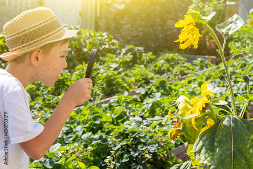 Fotografia Adorable little child boy in straw hat look at green plant leaves with magnifying glass