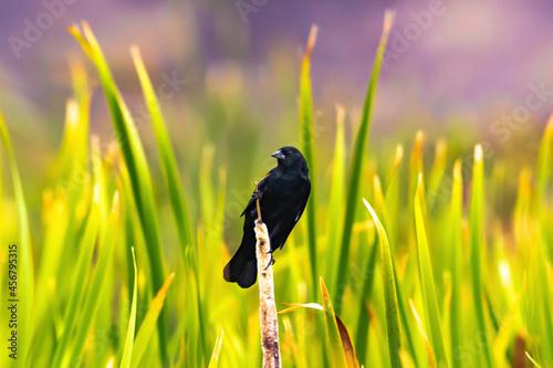 Fototapeta premium black bird on white wooden stick during daytime photo