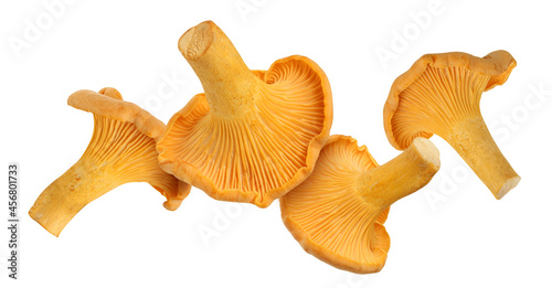 Billede på lærred falling chanterelle mushroom isolated on a white background