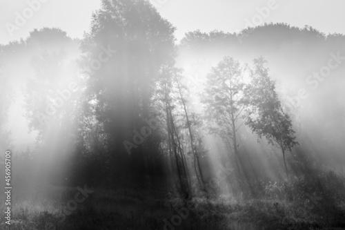 Obraz na plátně Sunlight hitting trees in a nature reserve on a misty morning