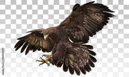Canvas Print Golden eagle landing hand draw and paint on grey white checkered background vect