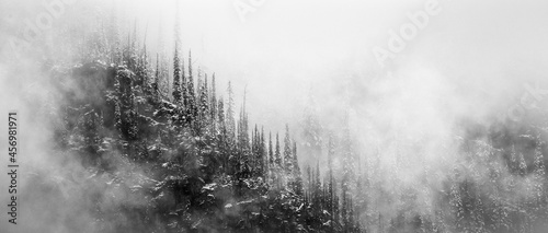 Fotografie, Obraz black and white