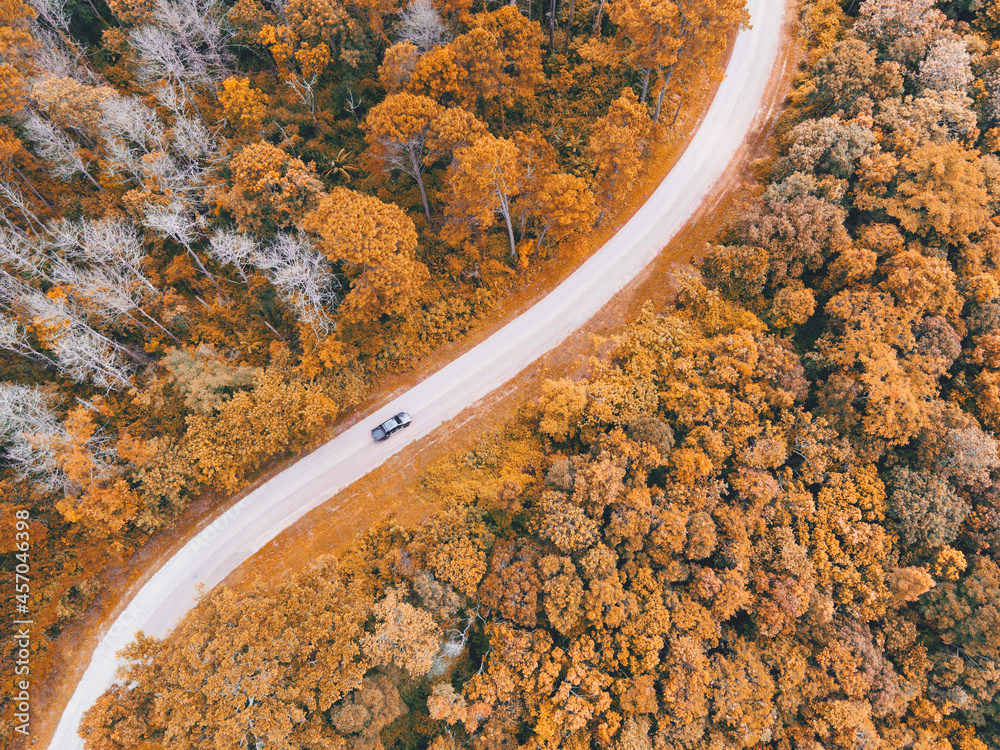 Aerial view car on road forest tree environment forest nature background, Texture of yellow orange tree and dead tree top view forest from above landscape bird eye view pine forest Autumn Orange Rush