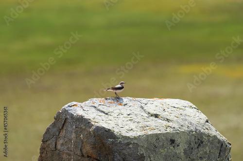 Fototapeta premium A small bird sits on a large stone