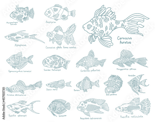 Billede på lærred Aquarium fish set