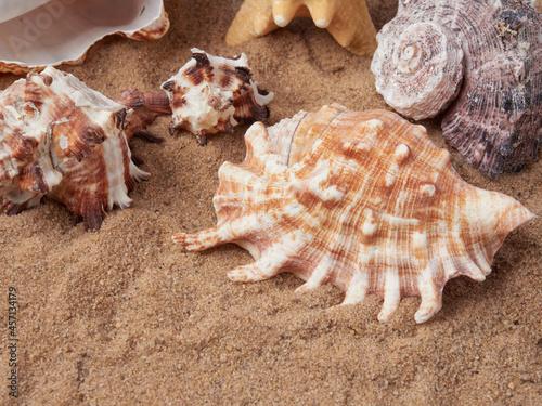 Billede på lærred top view of sandy background with dunes and various seashells
