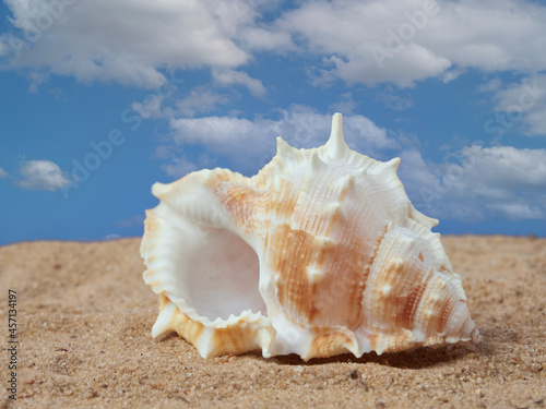 Fotografering Shell on the sand on the beach and the blue sky