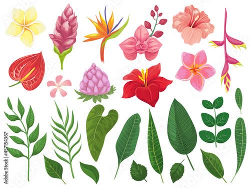 Fototapeta Tropical flowers