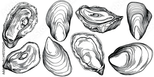 Canvas Oysters vector with engraving style illustration of logo or emblem for design seafood menu, lunch