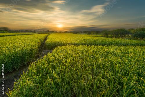 Fotografiet Guilin huixian wetland rice field