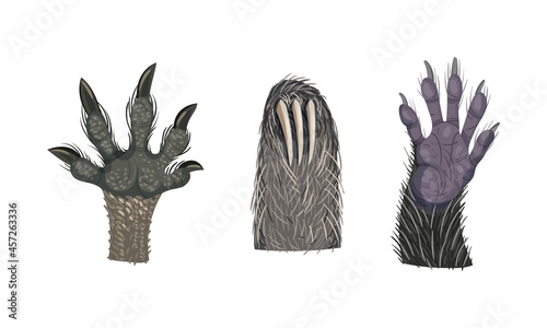 Fototapeta premium Animal Limb with Primate Hairy Paw and Sloth Claw Vector Set